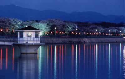 久米田池の写真 大阪府下のため池の中で最大の水面面積を誇る農業用水・養魚池です。725...